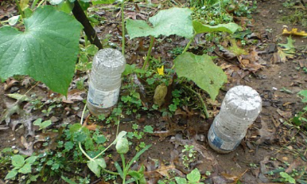 Using Plastic Bottles as Irrigation Systems for Home Gardens