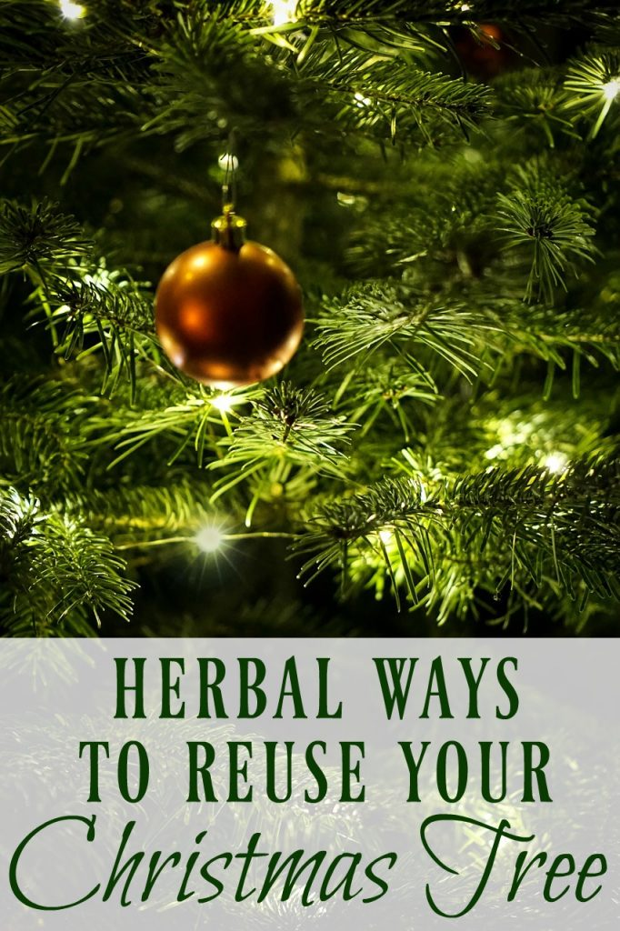Learn these herbal ways to reuse use your Christmas tree to make remedies, foods, skincare products, and more before you throw it out!