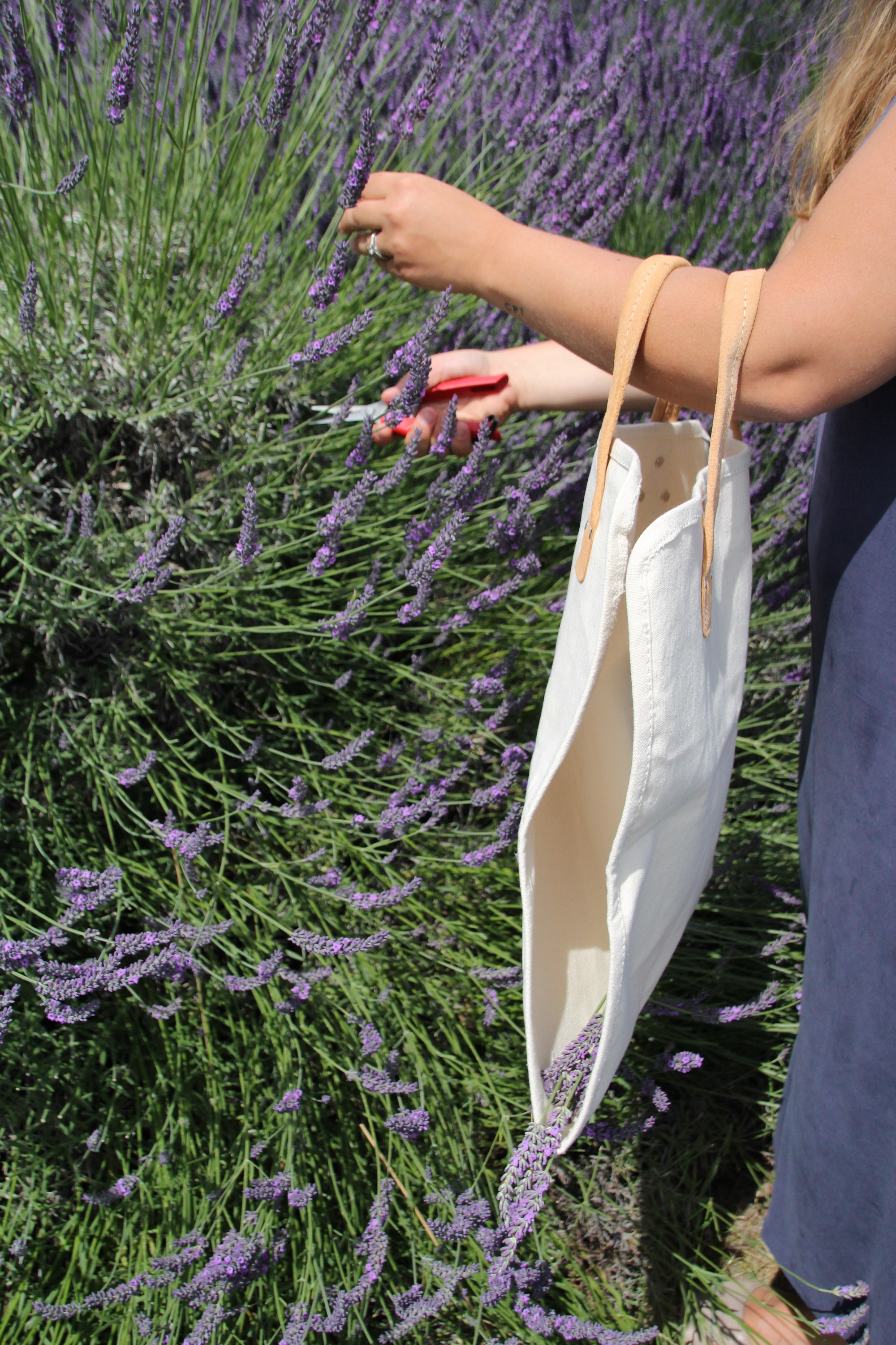 Lavender Fields Forever - A Dreamy Seattle Escape - The Stemmery